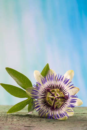 passions: hebal medicine -Passions flower on wooden table