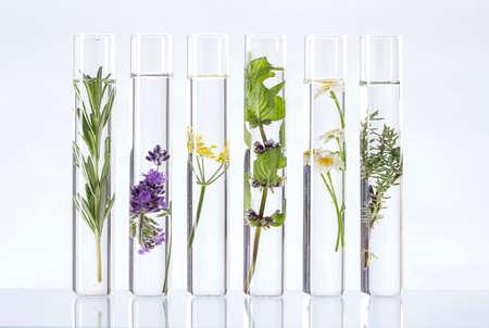 plante: Expérience scientifique - Fleurs et plantes dans des tubes à essai