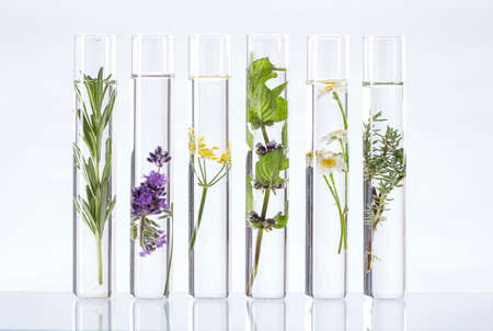 biotech: Scientific Experiment - Flowers and plants in test tubes Stock Photo
