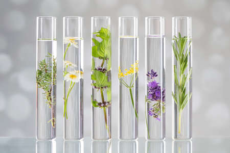 Scientific Experiment - Flowers and plants in test tubes 스톡 콘텐츠