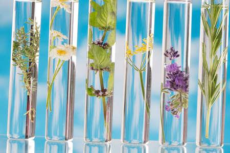 Wetenschappelijk Experiment - Bloemen en planten in reageerbuizen
