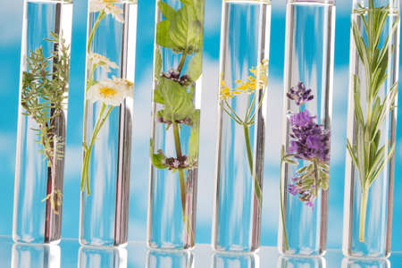 Scientific Experiment - Flowers and plants in test tubes Standard-Bild