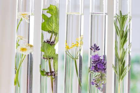 科学実験 - 試験管の花そして植物