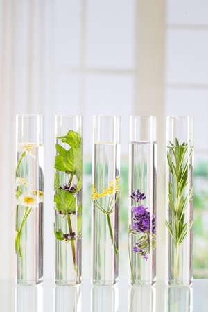 water thyme: Experimento cient�fico - Flores y plantas en tubos de ensayo