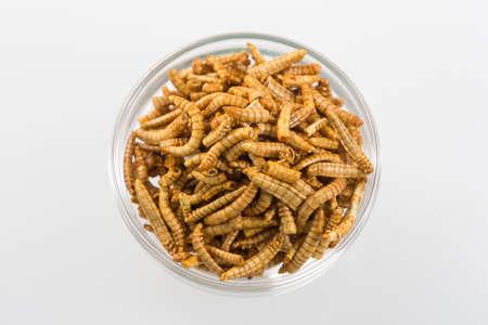 gusanos: Gusanos fritos asiáticos como nuevo aperitivo Foto de archivo