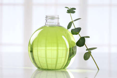 Eucalyptus leaves and essential oil