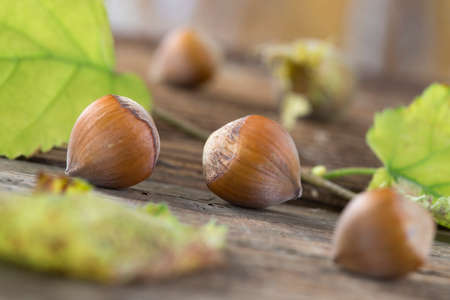 walnut: hazelnuts on wooden board with autumn leaves Stock Photo