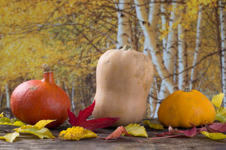 quinces: Fruit and vegetables over  autumn background