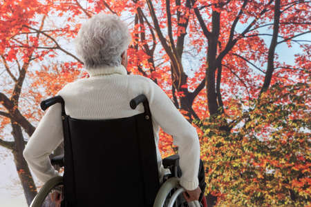 confined: Elderly male   confined to a wheelchair sitting   enjoying  day in autumn  in a park,