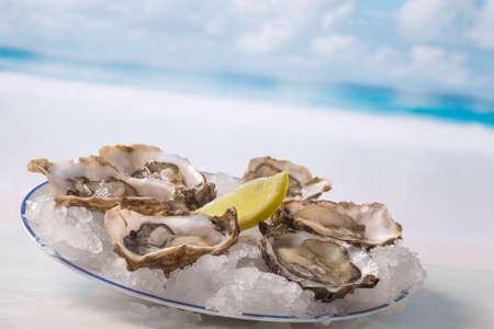 ostra: frescas ostras aperitivo franc�s sobre hielo con lim�n, para gourmets