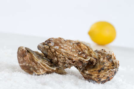 shuck: Shucked Oysters ready to be eaten