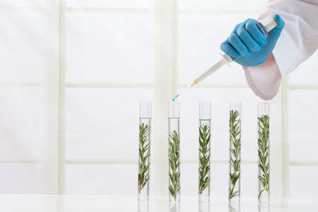 Genetically modified plants Plant seedlings growing inside of test tubes