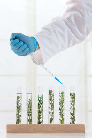 plant hand: Genetically modified plants Plant seedlings growing inside of test tubes