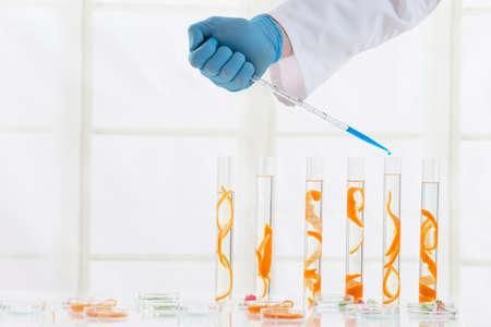 productos naturales: La investigación de belleza con productos naturales
