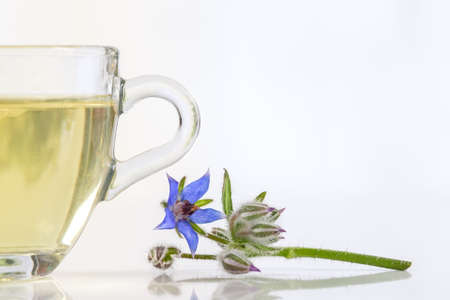 naturally: herbal tea  with flowers  borage