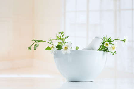 pestel: chamomile in ceramic mortar with pestel Stock Photo