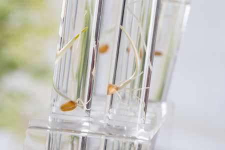 Image of biotechnology, for agricultural reaserch on how to feed the planet