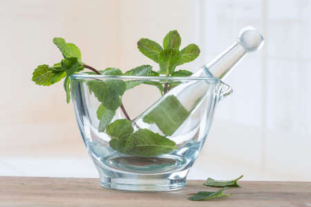 herbalism: healthy lifestyle and nutrition withl green mint in white glass mortar Stock Photo