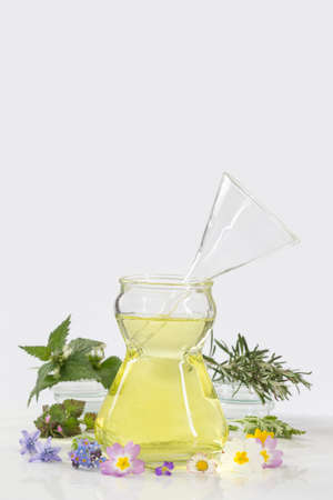 plantas medicinales: essential oils for with fresh herbs for herbal medicine