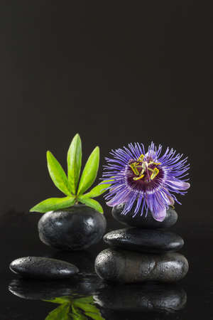 spa still life of passiflora flower basalt stones Stock Photo
