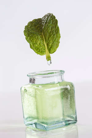 extracting: symbol picture of extracting the essential oilPeppermint Stock Photo