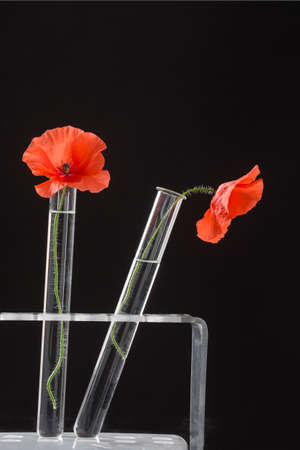 floral objects: Poppy in test tube for herbal medicine and essential oil Stock Photo