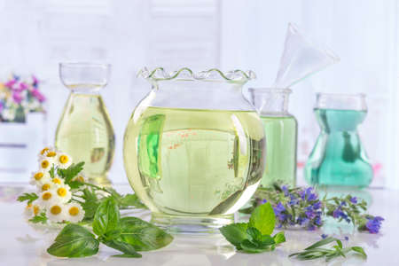 botle: Herbs collection of Fresh green plant and flowers and botle of essential oil Stock Photo