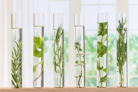 specimen: Flowers and plants in test tubes for scitific experiment Stock Photo