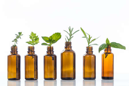 green bottle: essential oil bottle with herbs basil flower, basil flower,rosemary,oregano, sage,parsley ,thyme and mint Stock Photo