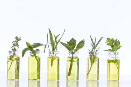 ätherisches Öl Flasche mit Kräuter Basilikum Blume, Basilikum Blume, Rosmarin, Oregano, Salbei, Petersilie, Thymian und Minze Standard-Bild