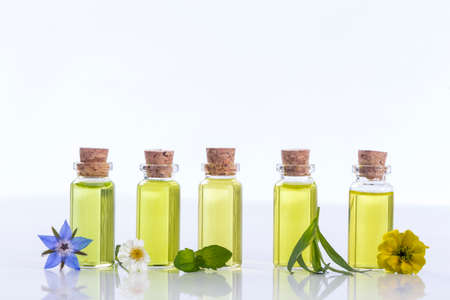 essential oils and medical flowers herbs on white Stockfoto