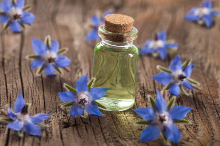 Borage oil Borago Officinalis on wooden background Banque d'images