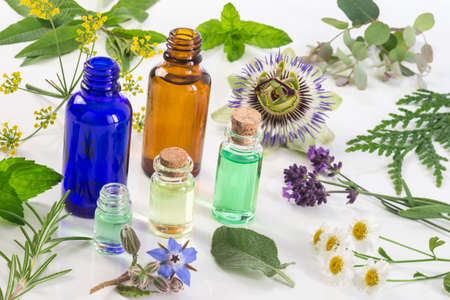 Herb leaf and flower selection , peppermint, sage, thyme, lavender and lemon balm with an aromatherapy essential oil glass dropper bottle . Zdjęcie Seryjne - 62013078