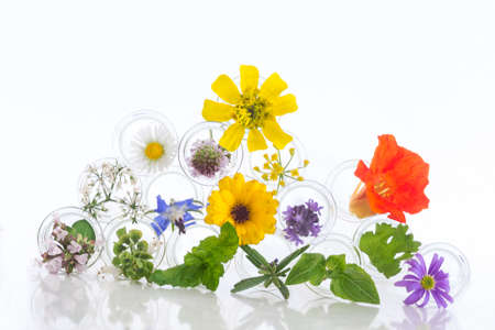 wild mint: herbal therapy concept, Flowers in test-tubes isolated on white