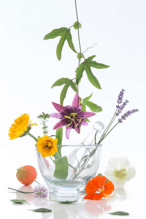 herb medicine: Natural herb and flower selection used in herbal medicine Stock Photo