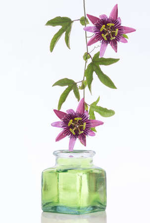 phytotherapy: Passionflower Purple use in phytotherapy aromatherapy and alternative medicine Stock Photo