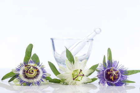Passion flower white, violet, and yellow with marble mortar Stock Photo