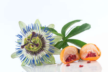 passiflora: Passiflora flower and fruit on a white background