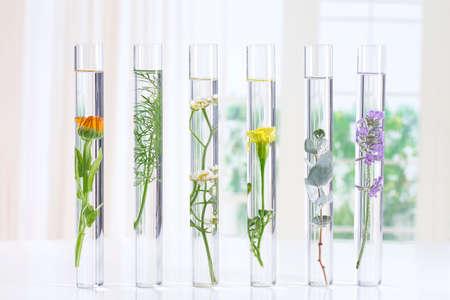 Experimento científico - Flores y plantas en tubos de ensayo