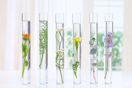 discovery: Scientific Experiment - Flowers and plants in test tubes Stock Photo