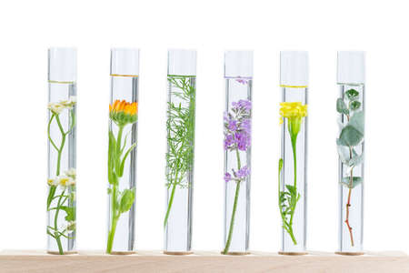 Scientific Experiment - Flowers and plants in test tubes Archivio Fotografico