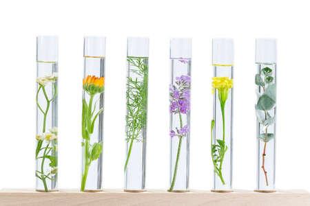 Experimento científico - Flores y plantas en tubos de ensayo Foto de archivo