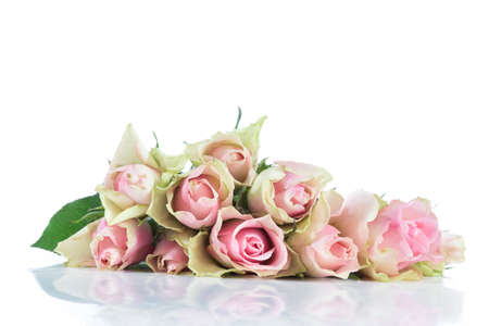 isolated flower: Big pink Roses Bouquet on a white background Stock Photo