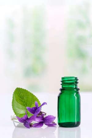 Gathered viola flower Viola Odorata . Raw materials for essential oils,