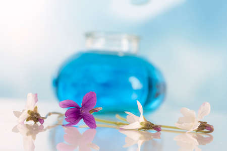 White and purple Violet flower,essential oil Viola odorata. I