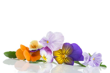 antirheumatic: Viola tricolor nice pansies, symbolizing the arrival of spring