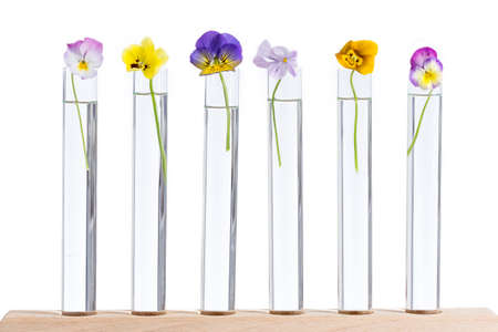 antirheumatic: group of nice pansy multicolored glass test tubes Stock Photo