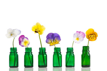 Viola tricolor nice pansies,essential oil in bottle Stock Photo