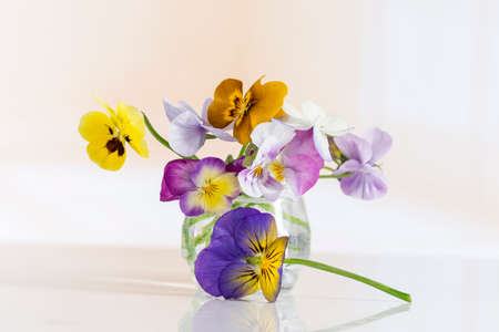Viola tricolor nice pansies ,in glass jar