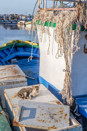 Houmt Souk, Marina, Tunisia, fishing boats, Djerba island, and a cat